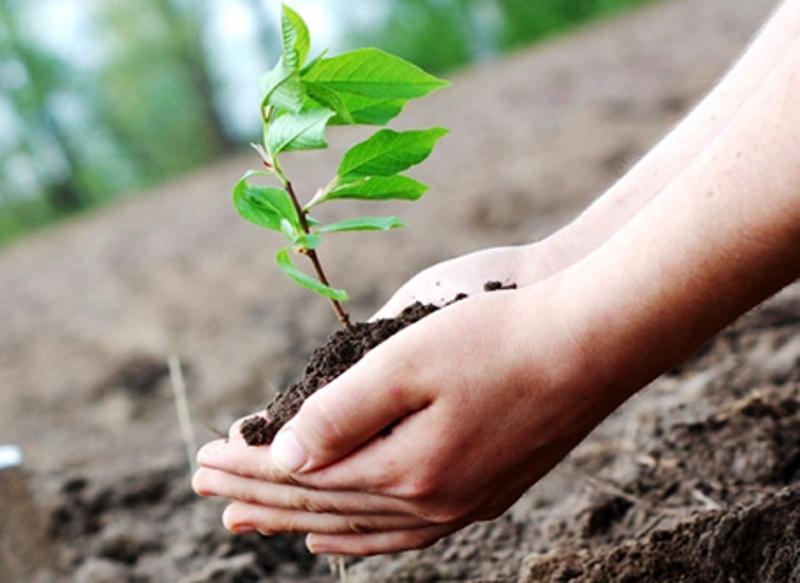 بیش از 200 هزار اصله نهال در هفته منابع طبیعی توزیع می شود