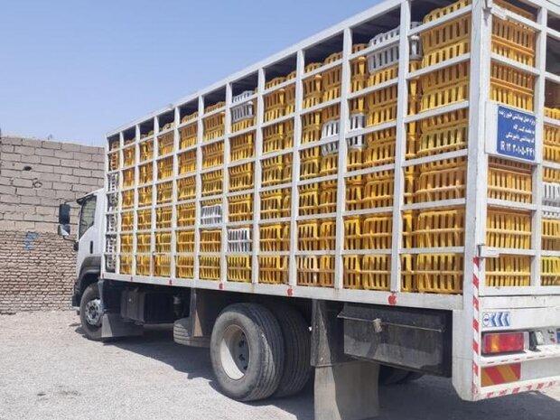 بیش از 5 هزار قطعه طیور فاقد مجوز در سلطانیه کشف شد