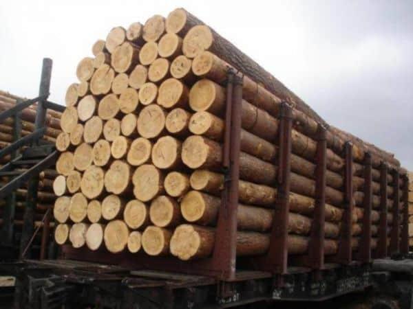 زنجان یکی از قطبهای تولید صنوبر در کشور است
