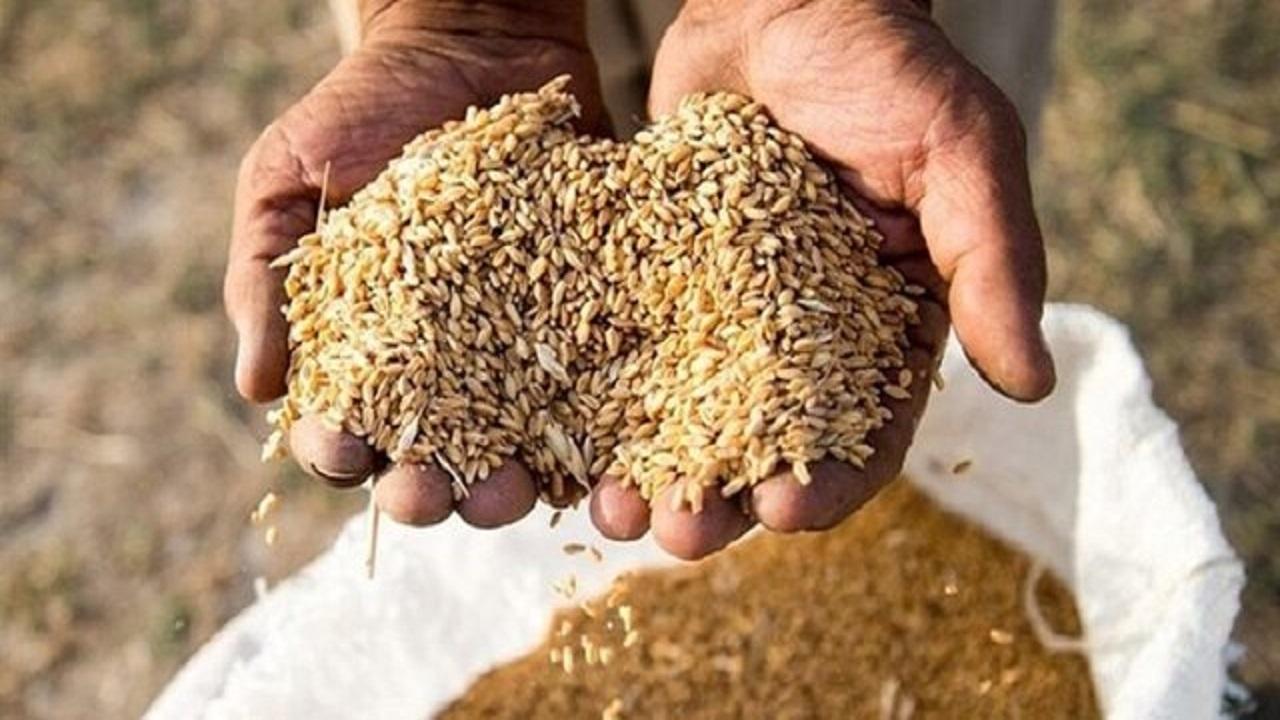 کشف بیش از52 تن گندم خارج از شبکه توزيع در شهرستان خدابنده