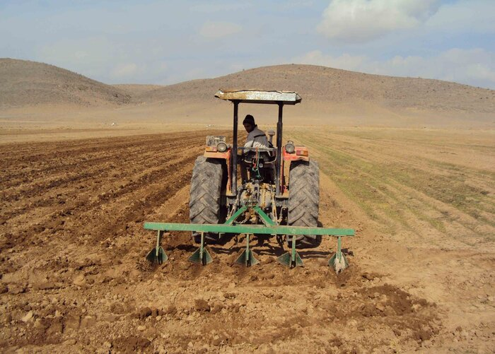 کشت گندم در ۳۲۰ هزار هکتار از اراضی کشاورزی زنجان