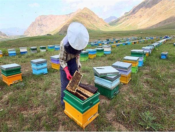 اختصاص شکر به زنبورداران زنجانی
