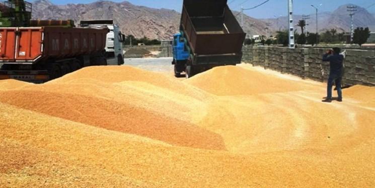 خرید بیش از ۷۲ هزار تن گندم در استان زنجان